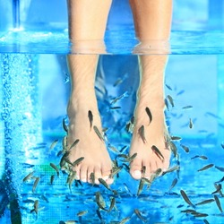 Fish Spa pedicure - Rufa Garra pedicure treatment. Closeup of woman enjoying skin care fish spa beauty treatment.