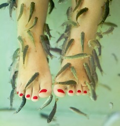 Fish spa pedicure with the fish rufa garra, also called doctor fish, nibble fish and kangal fish.