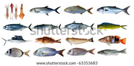 Fish species saltwater index classification seafood isolated on white [Photo Illustration]