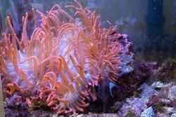 Fish swim along coral reefs in the aquarium.