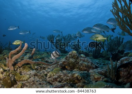 Fish swimming among sea rods and sponges on the reef.