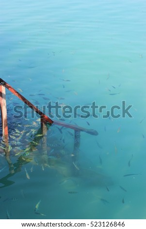 Fish swimming around wooden water steps in crystal clear blue water #523126846