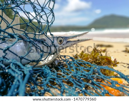 Fish that are affected by plastic waste and nets that become garbage