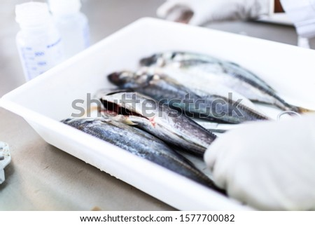 Fish to be tested in laboratory, quality test.