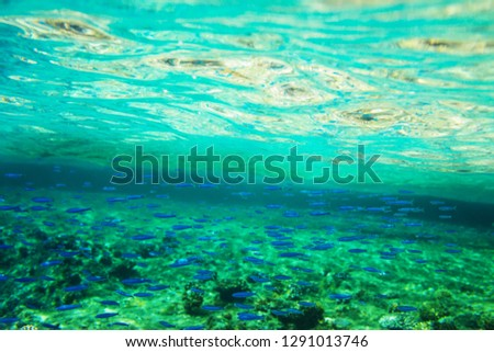 Fish Under