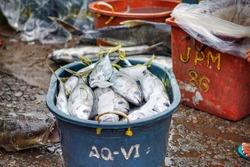 Fish wet market, Bicol, Philippines, 2018