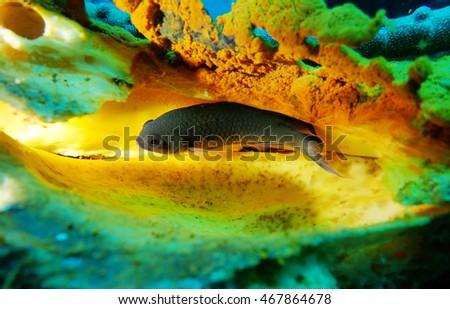 fish with colorful background #467864678
