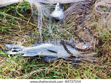 Fish with nets of fishermen