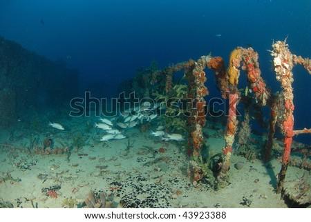 Fish & Wreck