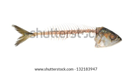 Fishbone with clipping path