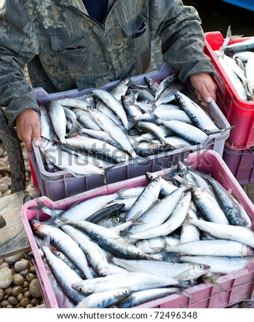 fisher's hands put a box full of fresh fish