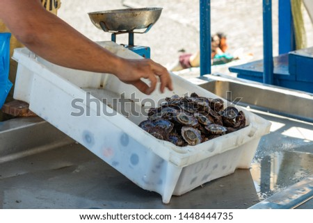 Fisherman after a successful fishing, behind the counter sells his catch of fish and shellfish. Gentle warm sunny day. Old port, historical part of Puerto Cruz. Tenerife, Spain.
