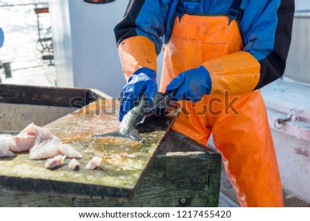 Fisherman cleaning and filleting a fresh caught saltwater fish on the board of deep sea fishing boat at Norwegian sea. #1217455420