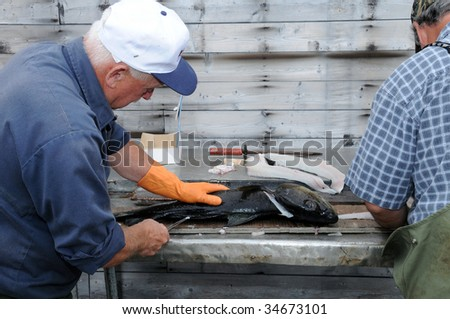 Fisherman filleting cod, Newfoundland