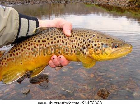 Fisherman holding a big fish - Brown Trout - prior to release