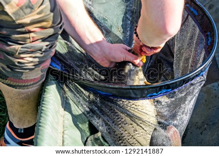 Fisherman pulls hooked carp hook with which it is attached. #1292141887