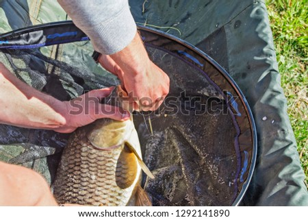 Fisherman pulls hooked carp hook with which it is attached. #1292141890