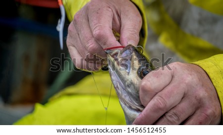 Fisherman removing the hook from a fish he has just caught while sea angling