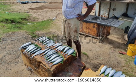 Fisherman sells fresh fish by the road