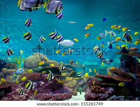 Fishes and coral underwater life