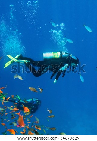 Fishes and divers