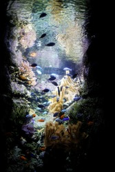 Fishes and goldfishes in aquarium of paris background with vegetation and colors and lights near eiffel tower