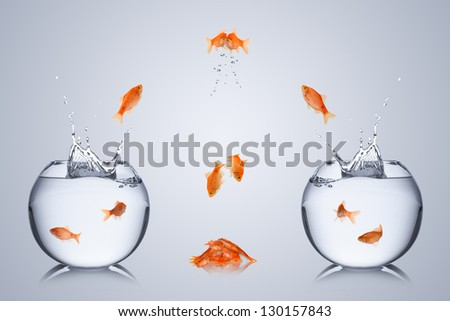 fishes fail to change bowl  and collide in the air