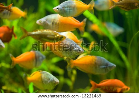 Fishes in aquarium