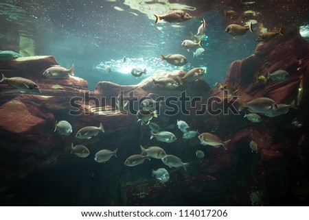 Fishes in big aquarium