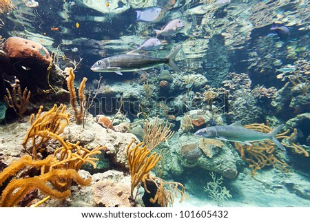 Fishes in Caribbean Sea, Mexico