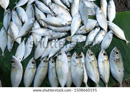 Fishes, The exciting Goan food. Fresh from ocean,  fresh fish at the market