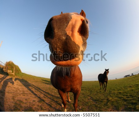 funny horse pictures. funny horse and shadows