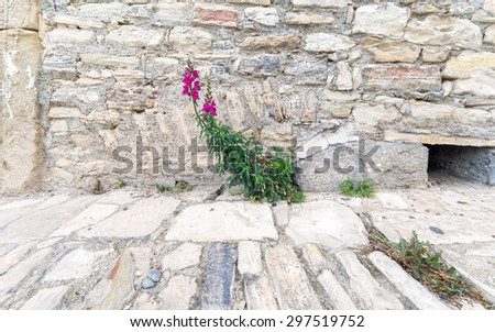 Fisheye View On Blossoming Pink Dragon Flower On Pavement Street