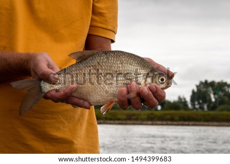 Fishing and catching and then holding in the hands a silver bream taking out of the rain river the IJssel province Overijssel the Netherlands #1494399683