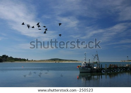 Fishing boat and birds