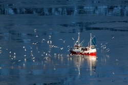 Fishing boat and seagulls in the north waters. Photo made in february on the Lofoten islands