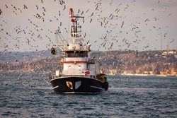 Fishing boat out on the water of Bosphorus, Istanbul returning to the bay and tens of seagulls are chasing the boat to grab a fish from it. Fishing season.