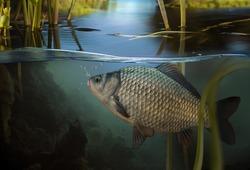 Fishing. Close-up shot of a fish hook under water