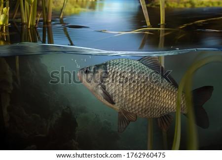 Fishing. Close-up shot of a fish hook under water ストックフォト ©