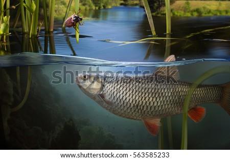 Fishing. Close-up shot of a fish hook under water #563585233