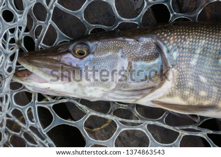 Fishing sport recreation  background #1374863543