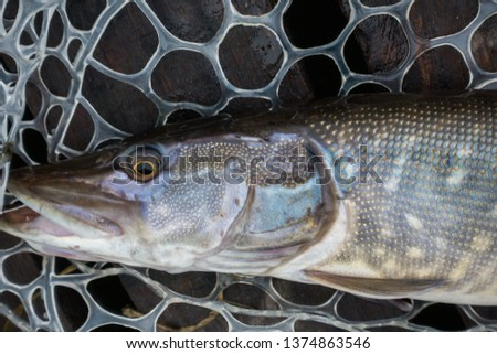 Fishing sport recreation  background #1374863546