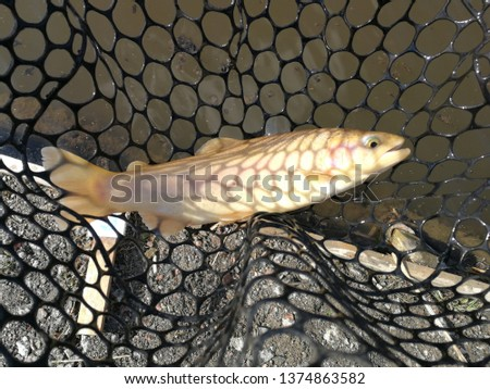 Fishing sport recreation  background #1374863582