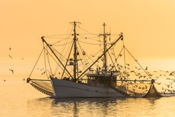Fishing trawler on the North Sea with nets and swarm of seagulls at sunset, Buesum, North Sea, Schleswig-Holstein, Germany