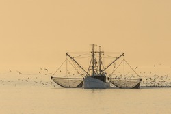Fishing trawler on the North Sea with nets and swarm of seagulls, Buesum, North Sea, Schleswig-Holstein, Germany