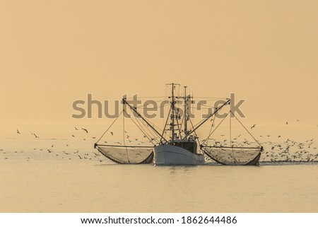 Fishing trawler on the North Sea with nets and swarm of seagulls, Buesum, North Sea, Schleswig-Holstein, Germany Stock photo ©