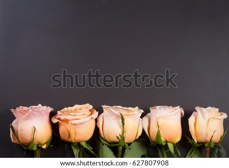 five beige rose on dark background with copy space for your text. top view #627807908