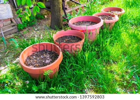 Five big flower pots with garden potting soil under a tree, laid down in fresh green grass, waiting to have flowers or small trees planted in them. Home gardening on a real rural patio in Romania. #1397592803