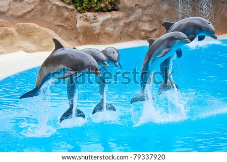 five bottlenose dolphins jumping in blue water