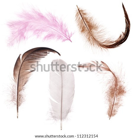 five color feather isolated on white background